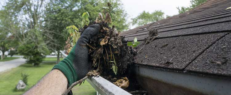 Dixon, IL Gutter Installation, Repair & Cleaning